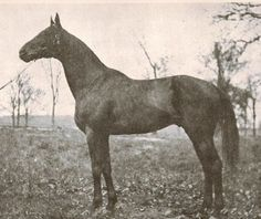 Mad Hatter, Co-Champion Handicap Male in 1921 (with Exterminator).:
