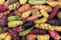 Oxalis Tubers are a sweet edible food source. Oxalis have five petals and can be pink or yellow Peruvian Potatoes, Potato Varieties, Types Of Potatoes, Tart Taste, Edible Food, Food Staples, Root Vegetables, Grow Your Own Food, Eating Raw