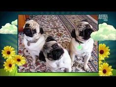 Mabel, Minnie & Max on America's Cutest Dog