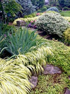 Toronto Gardens: Hakone grass: Fall in love with foliage