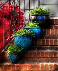 Entry steps lined with turquoise planters- love the colours, the red & green foliage, the blue pots, even the colour of steps.