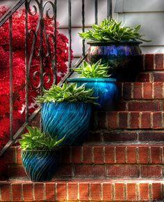 Blue pots and hostas