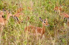 The cute in grass by gokawa0803 #animals #animal #pet #pets #animales #animallovers #photooftheday #amazing #picoftheday