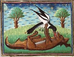 Magpie and wolf