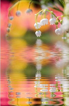 Spring pond with beautiful lily of the valley flowers. The colors are so pretty and happy, it makes me smile. Valley Flowers, Lily Of The Valley, Belle Photo, Pretty Pictures, Beautiful World, Simply Beautiful, Mother Nature, Beautiful Flowers, White Flowers
