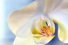 Abstract Close Up of a White Moth Or Phalaenopsis Orchid Flower Photographic Print by Vickie Lewis at Art.com