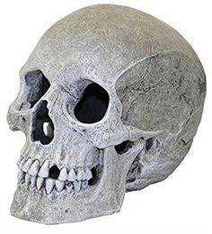 Rosewood Décor pour Aquarium Crâne d'Humain Très Réaliste