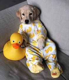 Any dogs and puppies that are cute. See more ideas about Cute Dogs, Cute puppies Tags: Super Cute Puppies, Baby Animals Super Cute, Cute Baby Dogs, Cute Funny Dogs, Cute Little Puppies, Cute Dogs And Puppies, Cute Little Animals, Cute Funny Animals, Doggies