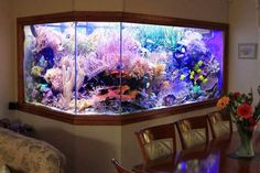 Step by step to make aquarium in the wall and DIY stylish wall fish tank by your own, making a mounting opening, wall fish tank designs and ideas for your interior, wall aquarium Wall Aquarium, Coral Reef Aquarium, Diy Aquarium, Science Bedroom, Types Of Hardwood Floors, Fish Tank Design, Saltwater Tank, Crystal Stemware, Tanked Aquariums