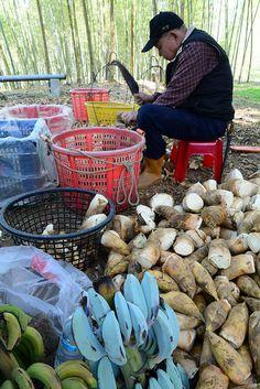 bamboo farmer, #Taiwan