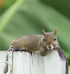 テディベアに恋しちゃったシマリスといつもの可愛い動物画像:ハムスター速報