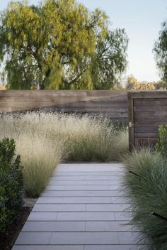Exterior garden design ornamental grasses new ideas Modern Landscape Design, Modern Garden Design, Garden Landscape Design, Modern Landscaping, Landscape Architecture, Backyard Landscaping, House Landscape, Landscaping Ideas, Modern Design