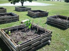 raised bed garden plots made from pallets :) 3 ft X3 ft and 18 in deep