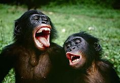 Funny Monkeys Laughing Funny