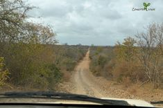 The Pafuri Road, from Mozambique to Kruger National Park Big Bush, Cattle Farming, Kruger National Park, Baboon, The Middle, The Other Side, Traveling By Yourself, Scenery, Things To Come