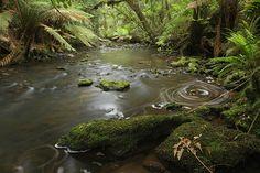 Tarkine region, Tasmania