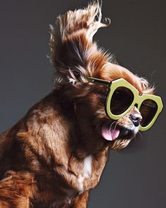 Not all dogs get a lucky start in life, but some really make up for it by becoming exceptionally fabulous! http://www.styletails.com/2016/09/01/the-worlds-5-most-famous-rescue-dogs/