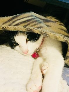Luna loves napping under my blanket!  https://ift.tt/2Jx9SNS cute puppies cats animals