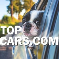 Startups, Supercars, Boston Terrier, Wednesday, Names, Let It Be, Super Car, Boston Terriers, Exotic Sports Cars