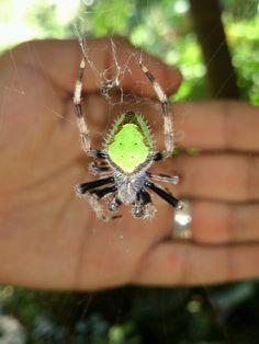 Una arañita flourecente