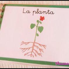 Botánica Montessori - Mini libro Nomenclatura de las partes de la planta - Imprimible Gratis