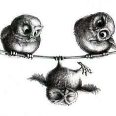 Three Owls - Freedom and Fun Canvas Print zeichnung, Three Owls - Freedom and Fun Leinwand Drucke Illustration Mignonne, Illustration Art, Illustrations, Owl Tattoo Design, Tattoo Designs, Tattoo Ideas, Buho Tattoo, Tattoo Owl, Owl Tattoo Meaning