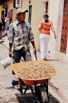 Guatemaltecos trabajadores y esforzados!