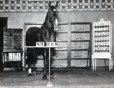 10 Most Famous Horses In History - Central Steel Build Jim Rogers, Animal Protection Organization, Local Fairs, Biblical Names, William Mckinley, Large Glass Jars, Names Of Artists, Morgan Horse, Black Stallion