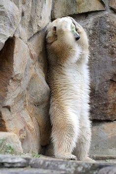 新春 動物おもしろ写真大集合 - (大紀元) : 【超厳選】動物おもしろ画像【かわいいだけじゃない】 - NAVER まとめ