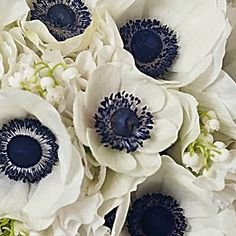 Blue anemones! This would be great to bring that navy blue into my bouquet!