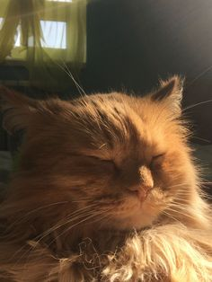Cat Profile, Pretty Cats, Insects, Beautiful Cats