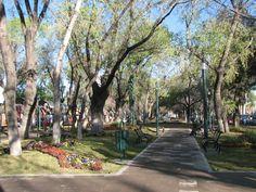 Sal a pasear con tu perro, ya sea en el Parque Guadiana, Paseo las Moreras o en tu parque favorito de la Ciudad de Durango