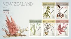 NZ Native Seaweed First Day Cover First Day Covers, Seaweed, Postage Stamps, Nativity, Coins, Place Card Holders, Colour, Illustration, The World