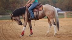 Are You Training Your Horse to Pull Against the Bit?