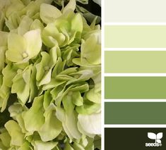 Hydrangea hues - Calming for the bedroom
