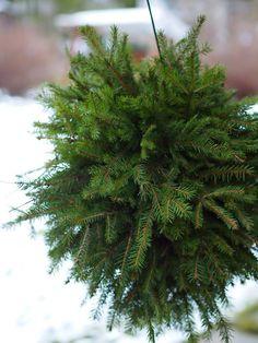 Havupallo - Kohti Joulua -joulublogi Herbs, Plants, Xmas, Herb, Plant, Planets, Medicinal Plants