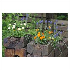 GAP Photos - Garden & Plant Picture Library - Violets and Muscari in containers made from railway sleepers - GAP Photos - Specialising in horticultural photography
