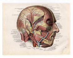 2 Vintage Illustrations Print medical 1933 skull skeleton anatomical anatomy page nude human body old anatomic freak diagram bones brain