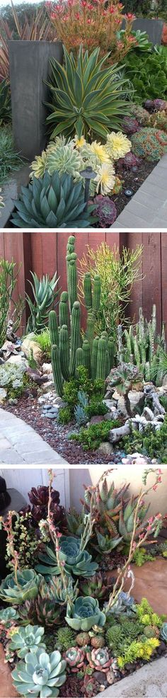Drought Tollerant Border & Garden Yard Inspitation For Hot Climates #succulent #xeriscape #catcus