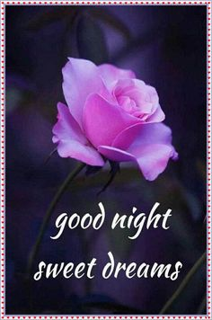 Images of good night sweet dreams - GameAFk New Good Night Images, Romantic Good Night Image, Funny Good Morning Images, Beautiful Good Night Images, Cute Good Night, Good Night Gif, Good Night Messages, Good Night Sweet Dreams, Good Night Quotes Images