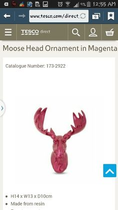 Pink (wall hung) moose head
