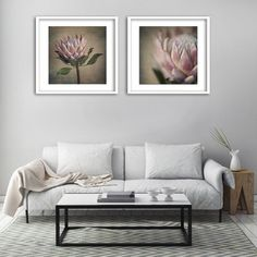 Fine art photography as decor. This print set includes prints framed with white mounting board and in a white box frame. Protea Art, Protea Flower, Botanical Decor, Botanical Prints, White Box Frame, Custom Wallpaper, Fine Art Photography, Decorating Your Home, Bedroom Decor