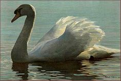 The backlighting on this swan is just gorgeous. Another Robert Bateman classic from his book, Natural Worlds.