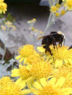 Bumblebee..