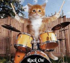 Kitten playing the drums GIF / Drummer Cats: A Magazine About Feline Drummers Animals And Pets, Baby Animals, Funny Animals, Cute Animals, Kittens Playing, Cats And Kittens, Kittens Meowing, Kittens Cutest, Pet Parade