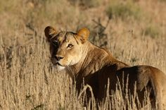Photo              The South African Tourism office is promoting nine trips; one includes a safari in Kruger National Park.                                       Credit             South African Tourism                      Don't save your tax refund check — spend it on travel. That is the... http://usa.swengen.com/how-and-where-to-take-a-tax-refund-vacation/