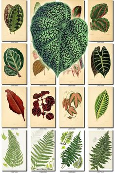 LEAVES GRASS-14 Collection of 280 vintage pictures leaf ferns tropics jungle High resolution digital download printable plants 300 dpi HQ           data-share-from=listing        >           <span class=etsy-icon