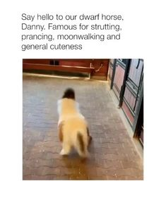 Dogs funny humor quotes god ideas dogs funny quotes humor is part of Cute animals - Cute Funny Animals, Cute Baby Animals, Funny Cute, Animals And Pets, Hilarious, Dog Quotes Funny, Funny Dogs, Humor Quotes, Funny Humor