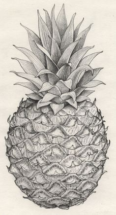 Pineapple pencil drawing.