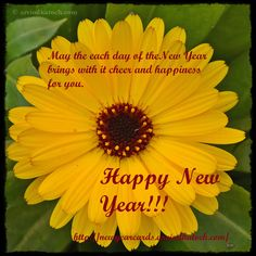 true picture hd happy new year cards with real hd nature and flower pictures